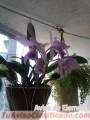 orquideas-cultivadas-en-casa-2.jpg