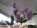 orquideas-cultivadas-en-casa-5.jpg
